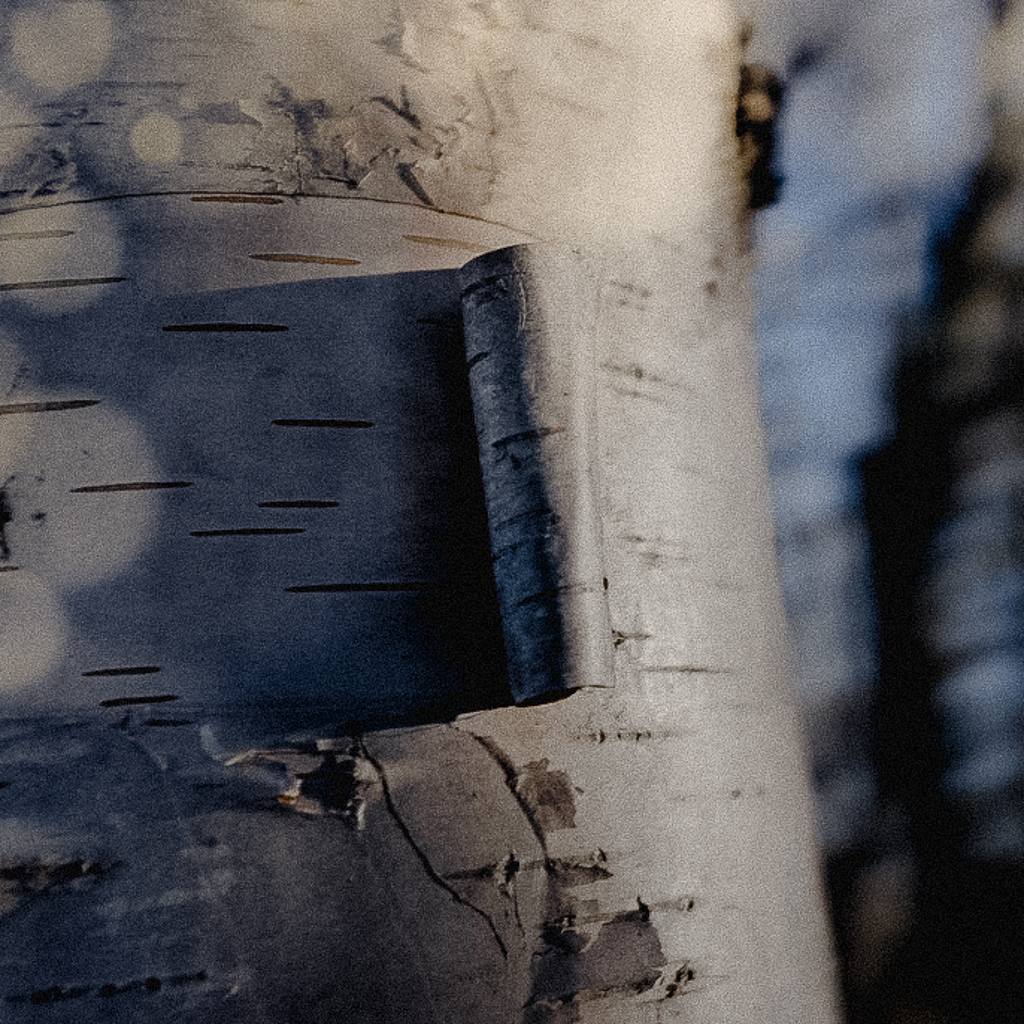 hedy bach images - birch -9