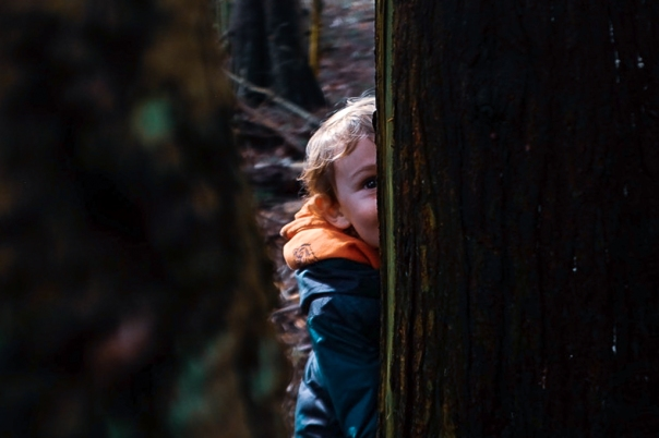 hedy bach images - forest -1