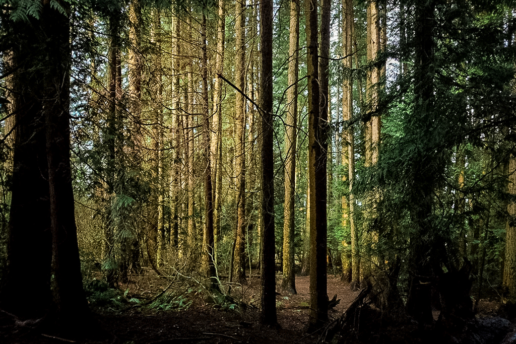 hedy bach images - forest -3