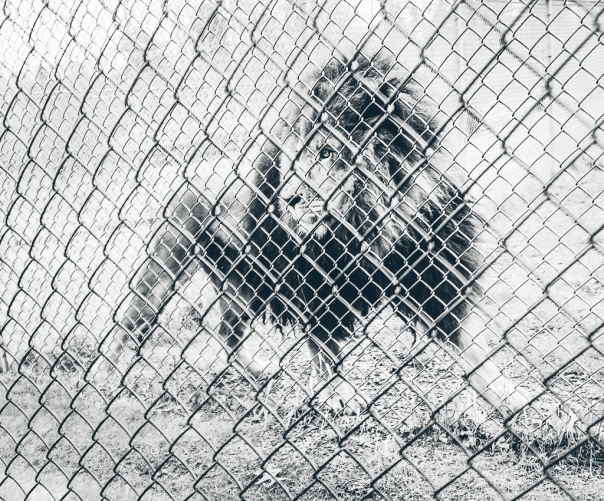 hedy bach images - zoo - 1