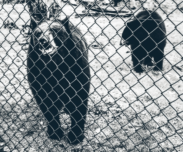 hedy bach images - zoo - 3