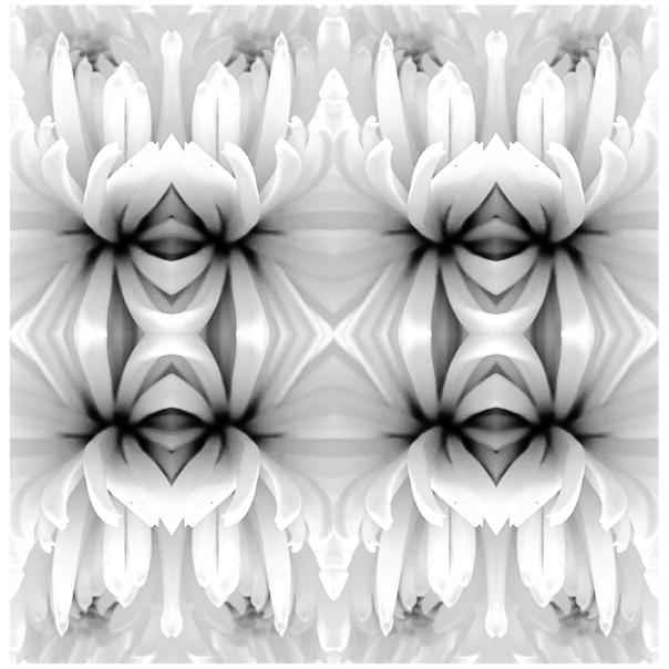 hedy bach images - abstarct flowers - 1_