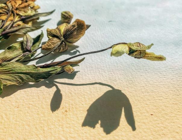 hedy bach - dead flora - 10