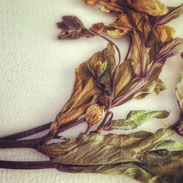 hedy bach - dead flora - 2