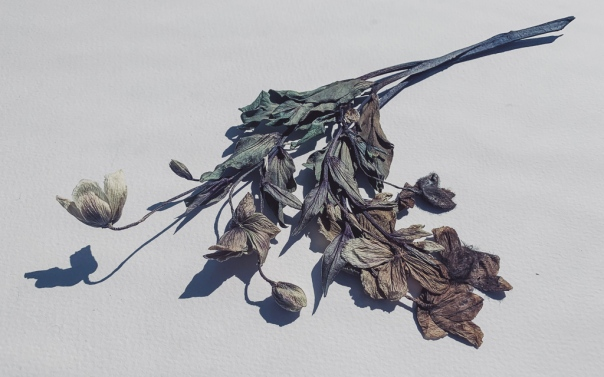 hedy bach - dead flora - 4