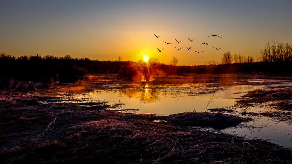 hedy bach - sunrise spring - 11