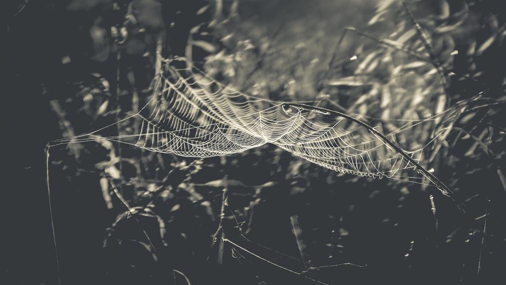 hedy bach - spider web - 1