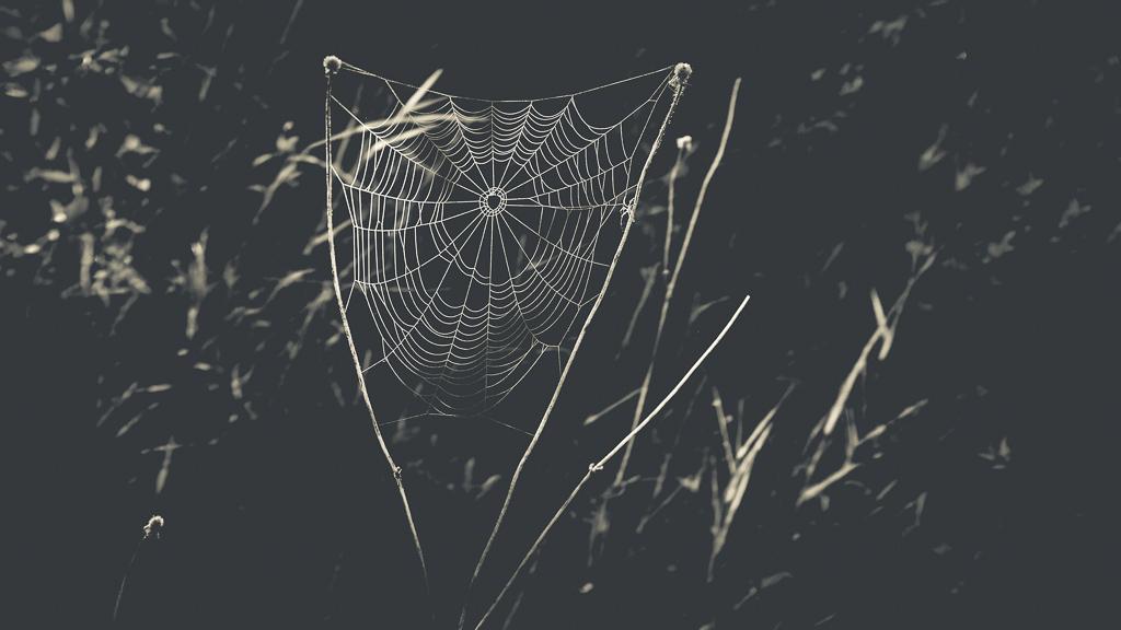 hedy bach - spider web - 4