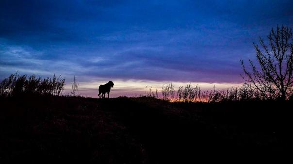 hedy bach - sunrise + juno - 3